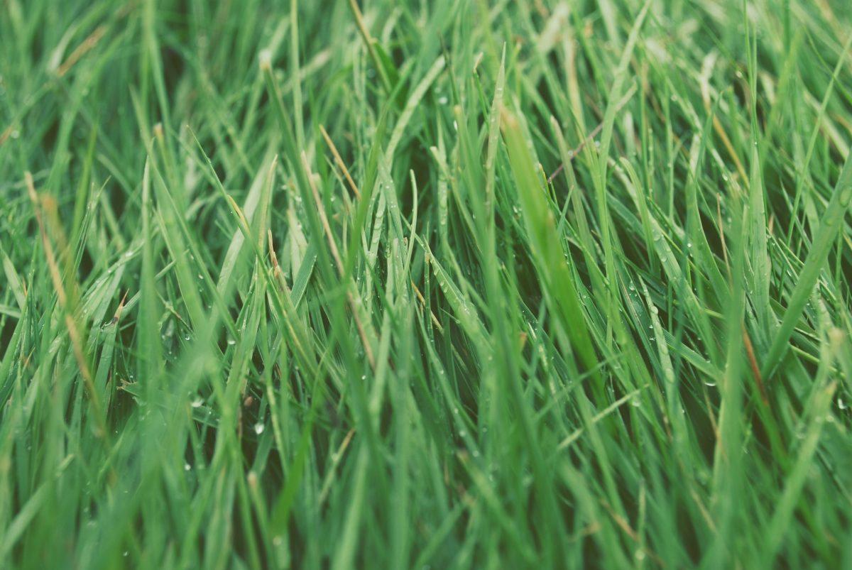 Tag 180/2016: Füße im Gras