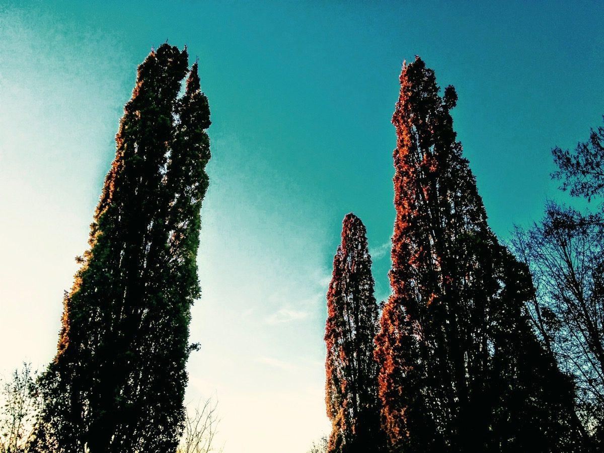 Tag 324/2016: Bäume und so