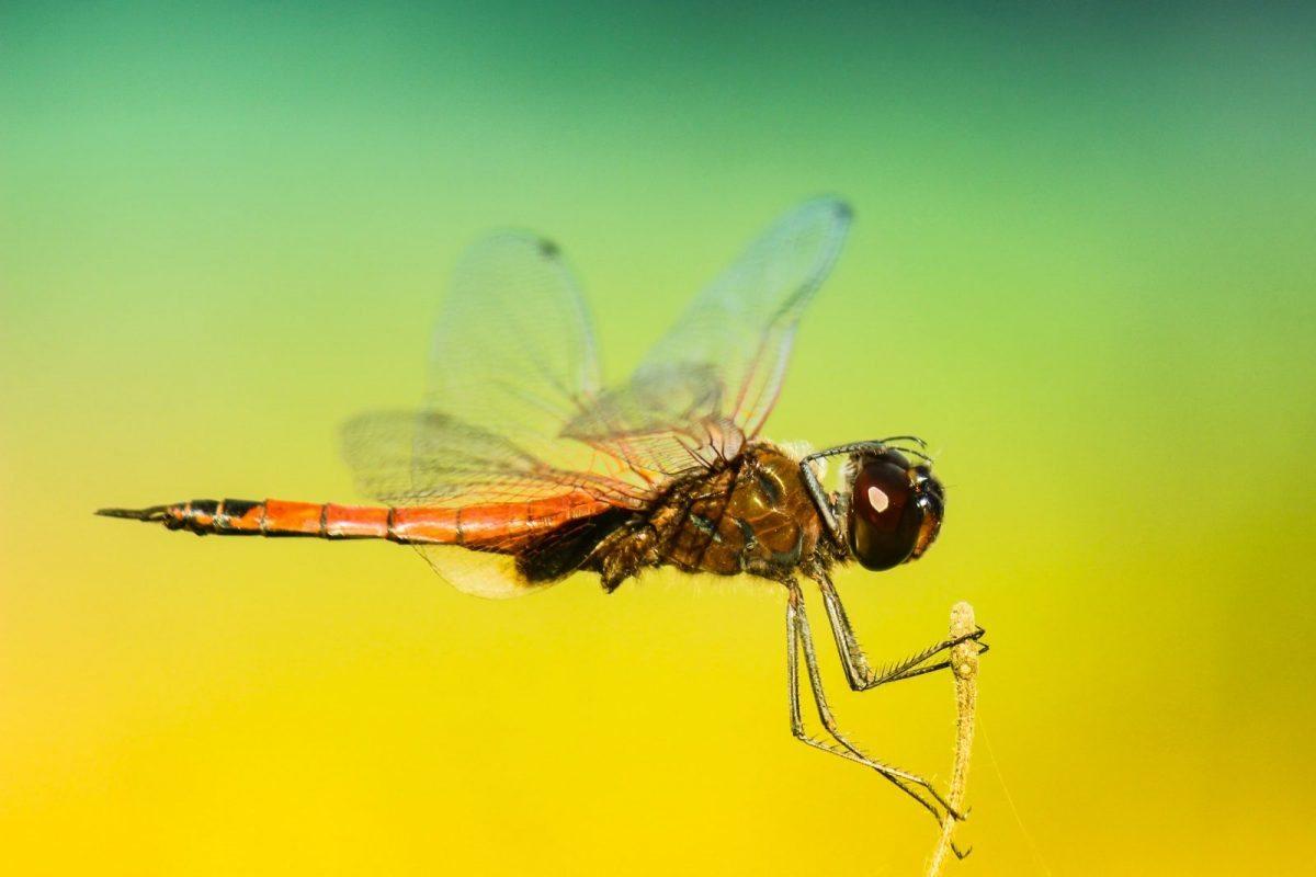 Episode 43/2017: Mosquito, Beethoven und Anti-Nobelpreis